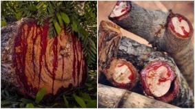 Bloodwood Tree रहस्यों से भरा, निकलता है इंसानों जैसा खून